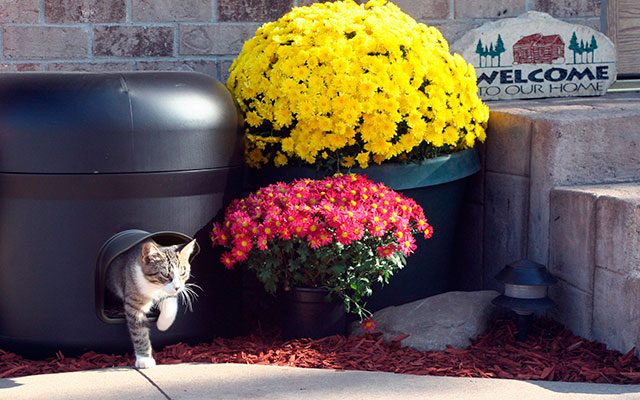 Best Feral Cat Shelter in 2019 – A Solution to Stray Cats' Freezing Winter