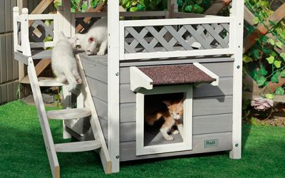 Best Outdoor Cat House in 2019