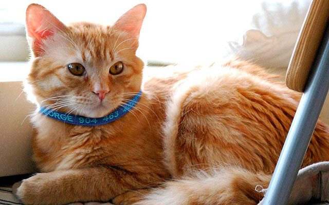 Top 8 Personalized Cat Collars in 2019 – Make Your Cat Look Good