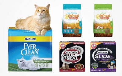 14 Best Clumping Cat Litter Items in 2019