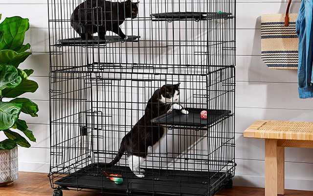 Best Cat Cages in 2019 – Consider for Training and Moving