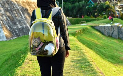 Choosing the Best Cat Carrier Backpack to Hang Out with Your Pets!