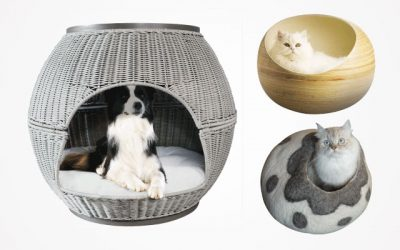 Best Cat Igloos That Your Cats Will Love