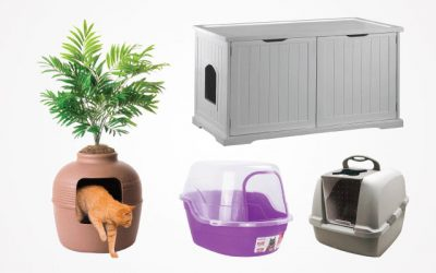 Best Kitty Litter Box in 2019 For Your Feline Friends