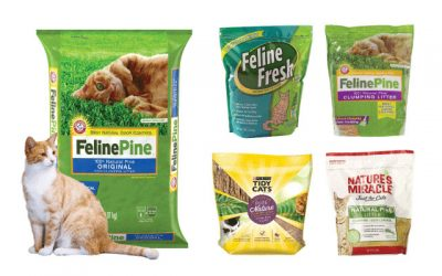 Best Pine Cat Litter for Your Feline Friends 2019
