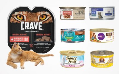 The Best Wet Cat Food in 2019