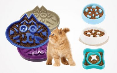 11 Top-Ranking Slow Feed Cat Bowls in 2019