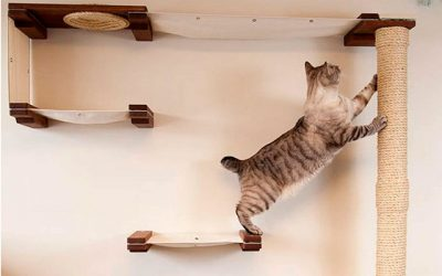 12 Best Cat Shelves for More Active and Happier Cats [Updated 2019]