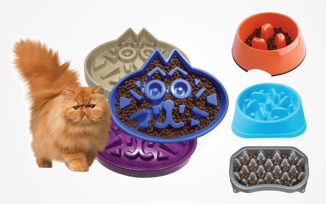 11 Best Cat Slow Feeders in 2019 That Exceed Your Expectation