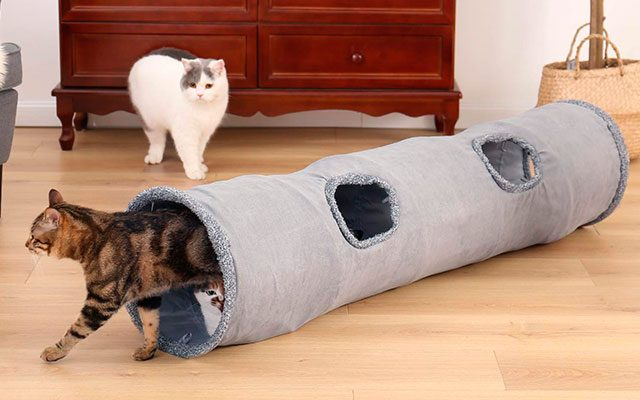 Best Cat Tunnels in 2019 for Your Pets