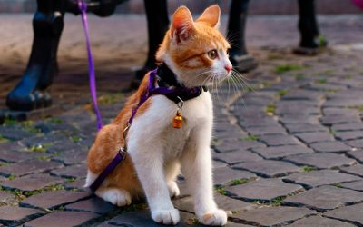 The Best Kitten Collars in 2019