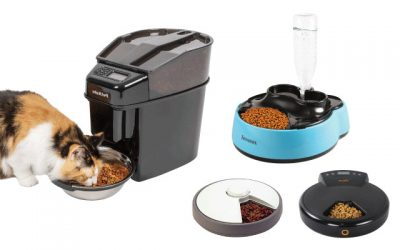 17 Must-Try Automatic Cat Feeders Will Make You Satisfied