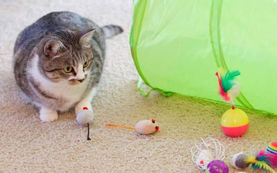 Best Safe Kitten Toys in 2019