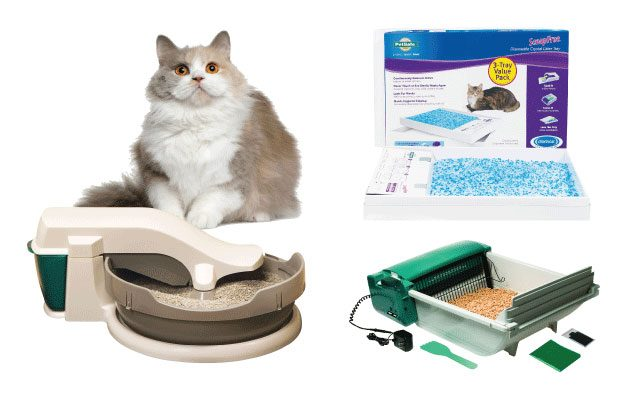 Best Automatic Cat Litter Boxes in 2019
