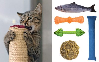 11 Best Cat Chew Toys in 2019